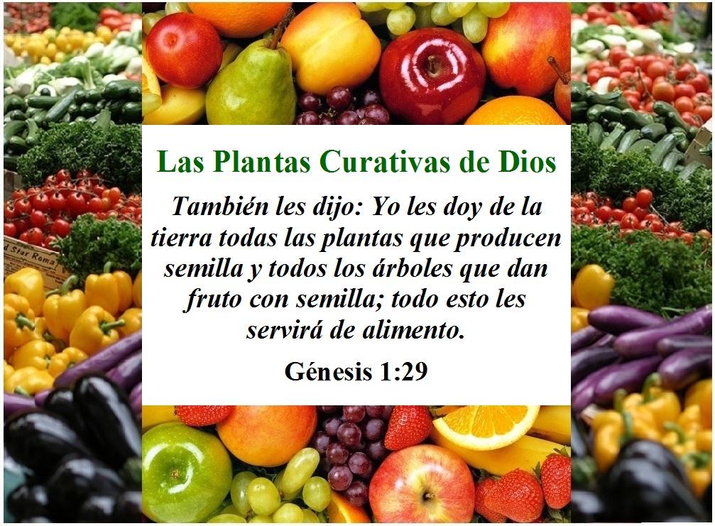 Qui nes somos las plantas curativas de dios - Cosas sobre las plantas ...